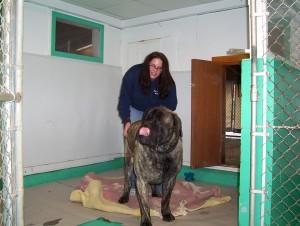 giantdogboarding